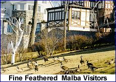 Fine Feathered Malba Visitors